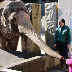 <span>おでかけニュース【神奈川】</span> ゾウの鼻に直接プレゼント。子どもたちからのバレンタイン