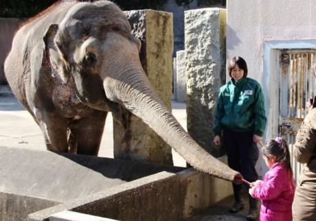 ゾウの鼻に直接プレゼント。子どもたちからのバレンタイン