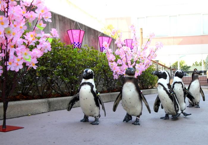 週末出かけたい。よちよち歩きのペンギンと記念撮影!