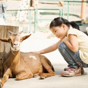 <span>動物特集 その4</span> 動物と触れ合ったあとは、大きな遊具にBBQも! 1日中遊べる6つの施設