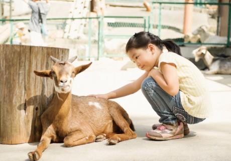 動物と触れ合ったあとは、大きな遊具にBBQも! 1日中遊べる6つの施設