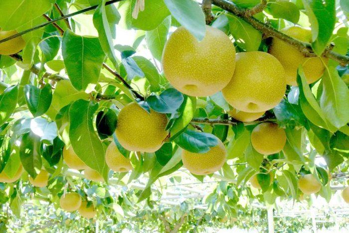 マルシェで味わう秋の旬。フルーツ収穫祭