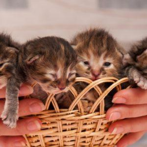 <span>保育園義務教育化2</span> 子どもより猫が欲しい!? 日本の少子化の現実【古市憲寿/保育園義務教育化・2」】