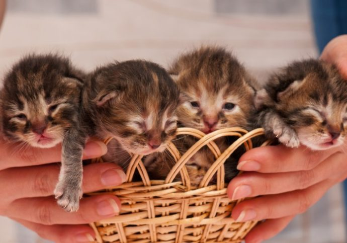 Cute newborn kittens asleep on the human's hands close-up