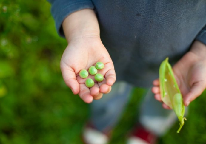 pea child hand kid green organic five pieces