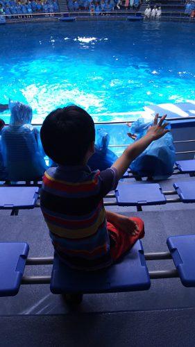 ドルフィンパフォーマンスは、一人で前の方に。男らしく!?レインコートなしで、イルカからの水しぶきを浴びるのがお気に入り(着替え持参)。