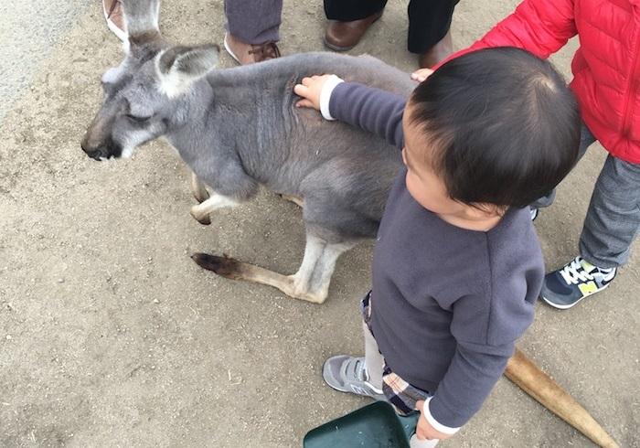 カピバラもカンガルーも目の前に。全天候型テーマパークで動物と触れ合う
