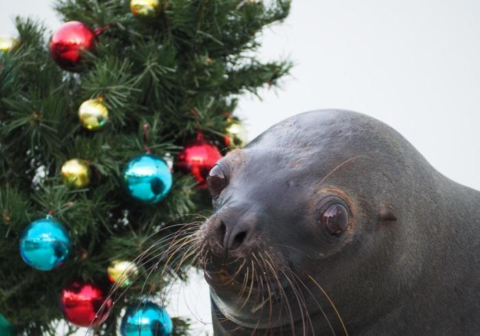 イルカにタッチもできる! 水族館のクリスマス