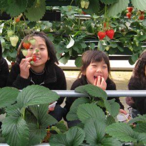 <span>おでかけニュース【スペシャル】</span> 遊園地でも遊んで大満足! 埼玉・むさしの村でいちご狩り