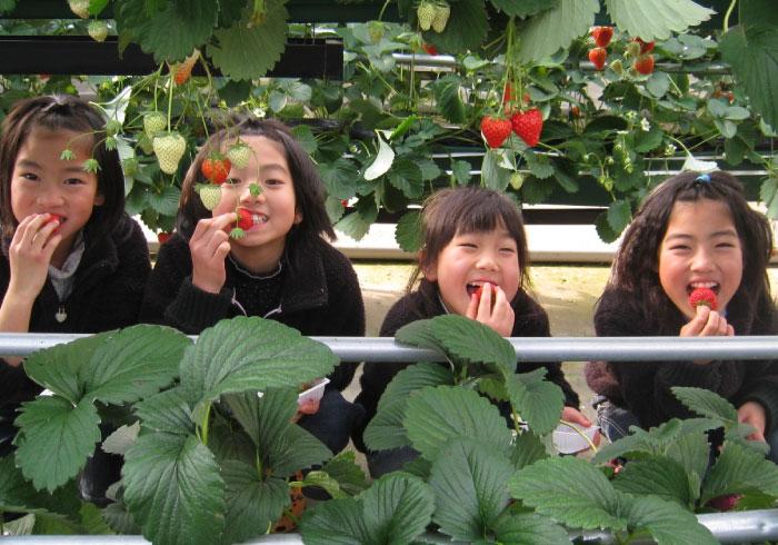 遊園地でも遊んで大満足! 埼玉・むさしの村でいちご狩り