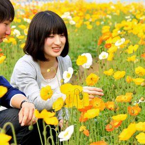 <span>おでかけニュース【スペシャル】</span> 親子で花摘みが楽しめる、ポピーの花畑【お花畑特集・千葉】