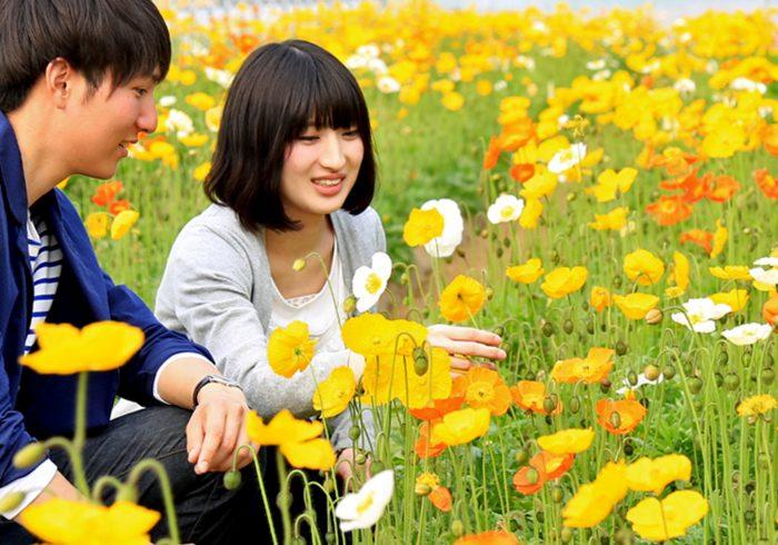 親子で花摘みが楽しめる、ポピーの花畑【お花畑特集・千葉】