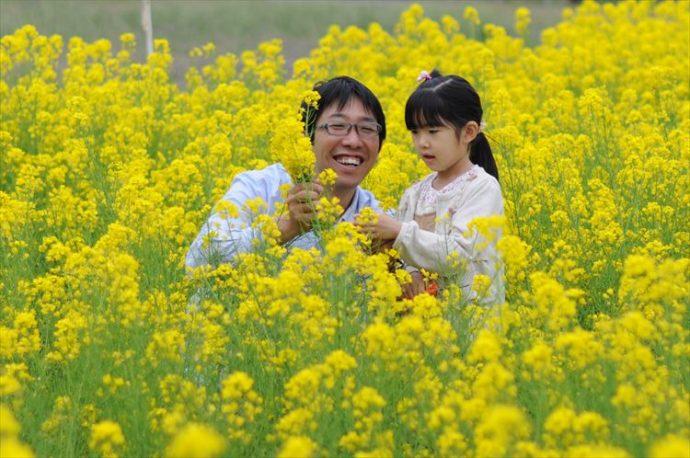 菜の花摘み_R