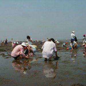 <span>おでかけニュース【千葉】</span> 早めにスタートできるのがうれしい。久津間海岸の潮干狩り