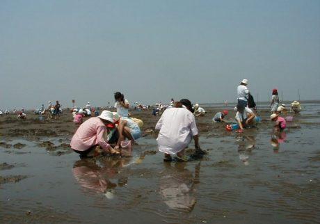 早めにスタートできるのがうれしい。久津間海岸の潮干狩り