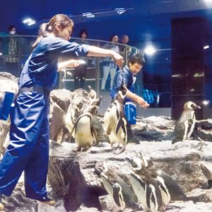 <span>水族館特集5</span> 水族館のごはんの時間。餌付けショーいろいろ