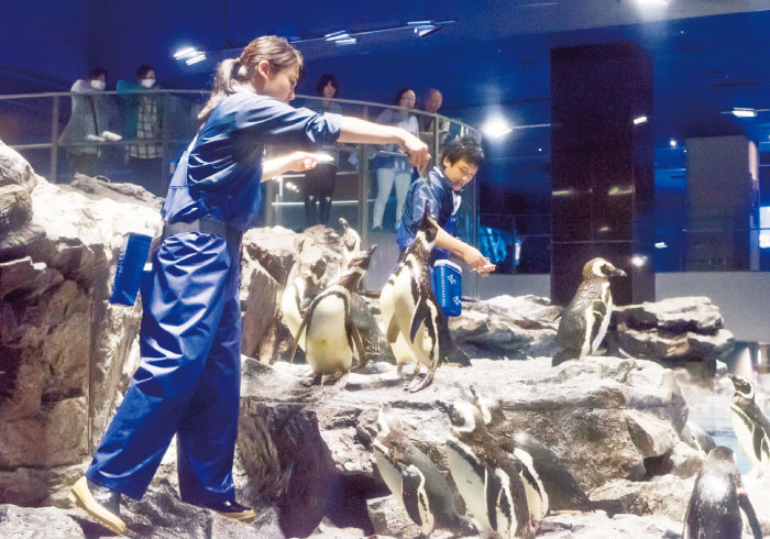 水族館のごはんの時間。餌付けショーいろいろ