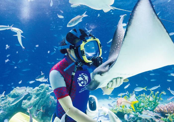 ダイバーと魚たちが華麗に泳ぐ。水族館の水中パフォーマンス