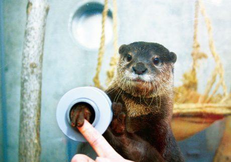 カワウソが指をにぎり返してくれる! スキンシップが楽しい水族館・1