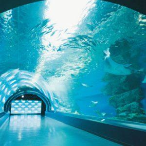 <span>水族館特集9</span> 最新ニュースをお届け! 親子で行きたい水族館4【東京】