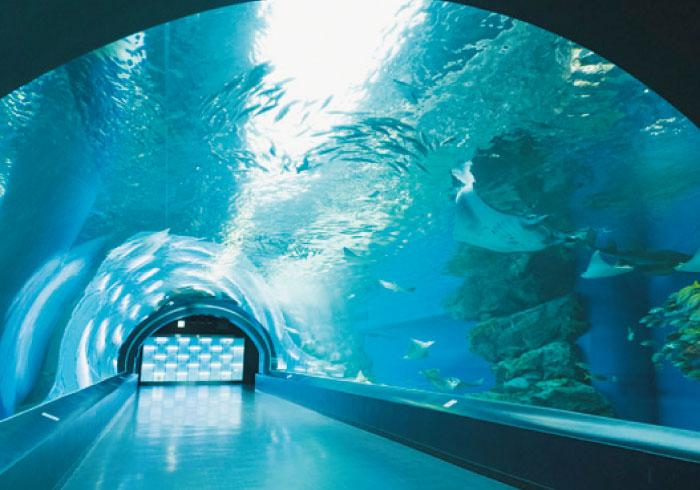 最新ニュースをお届け! 親子で行きたい水族館4【東京】