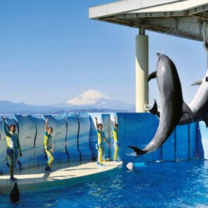 <span>水族館特集10</span> 最新ニュースをお届け! 親子で行きたい水族館5【神奈川・千葉】