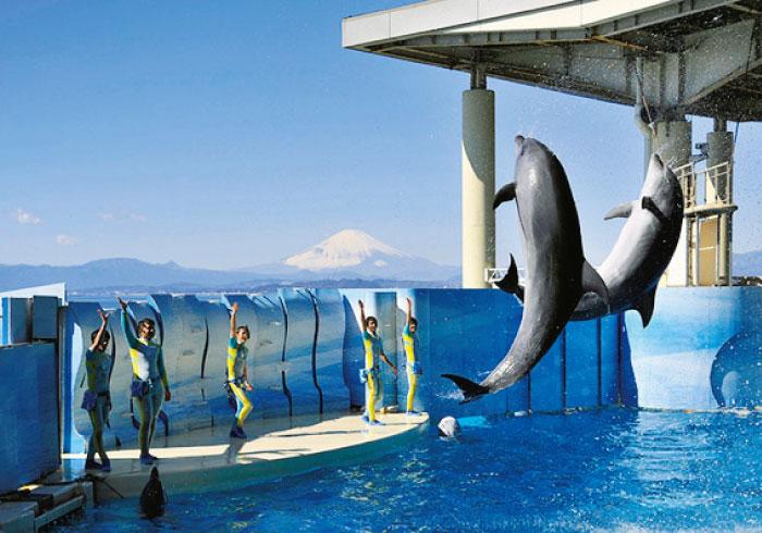 最新ニュースをお届け! 親子で行きたい水族館5【神奈川・千葉】