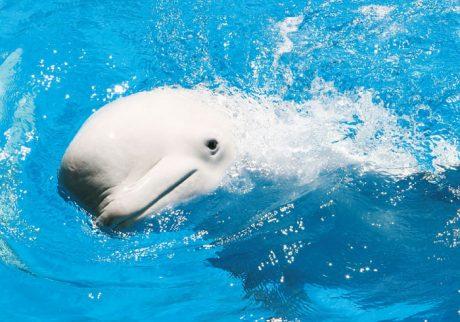 イルカにペンギン。水族館のアイドルは誰?