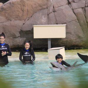 <span>「ドリームキッズ・プロジェクト」体験ルポ・最終回</span> シーワールドで、イルカと泳いだり、ペンギンを間近に観察【カリフォルニアの旅・6】