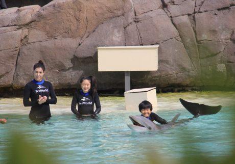 シーワールドで、イルカと泳いだり、ペンギンを間近に観察【カリフォルニアの旅・6】