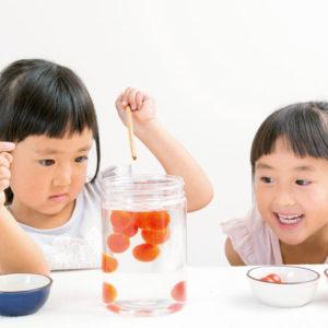 <span>3・4・5 歳向け</span> 雨の日は親子で実験! 砂糖を使った、甘いトマトの見分け方
