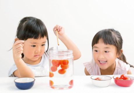 雨の日は親子で実験! 砂糖を使った、甘いトマトの見分け方