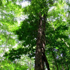暑い日は絵本の木陰へ。この夏、読みたい絵本3冊