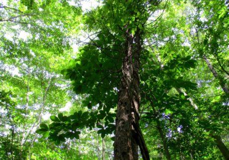暑い日は絵本の木陰へ。この夏、読みたい絵本3冊【Anneママの『絵本とボクと、ときどきパパ』】