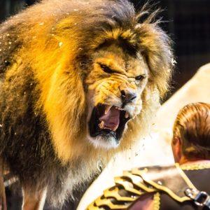 <span>おでかけニュース【千葉】</span> ホワイトライオンの猛獣ショーに空中ブランコ。ドキドキのサーカス体験