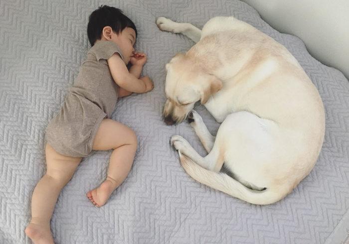 赤ちゃんがいても大型犬は飼える? 「もめん」くんと「きぬ」ちゃんの暮らし