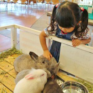 <span>おでかけニュース【神奈川】</span> イヌやウサギ、メンフクロウにもタッチできる。ズーラシア「秋のふれあい動物園」