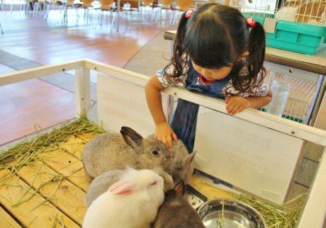 イヌやウサギ、メンフクロウにもタッチできる。ズーラシア「秋のふれあい動物園」