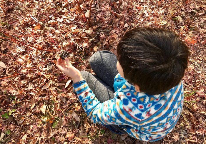 絵本の中で、落ち葉集めと木の実拾い