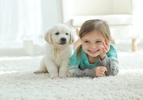 子どもが犬にかまれてしまった!飼い主に賠償義務はあるの?【弁護士・宮地先生に聞きました】