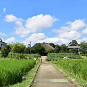 <span>都心で自然&農業体験ができる</span> 足立区都市農業公園を訪ねてみた!