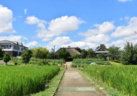 足立区都市農業公園を訪ねてみた!