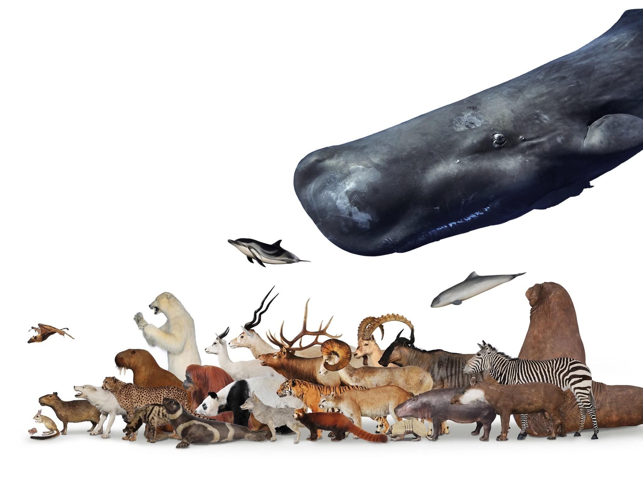大哺乳類展