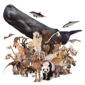 <span>海も陸も500点以上が大集合!</span> 「大哺乳類展2ーみんなの生き残り作戦」開催!