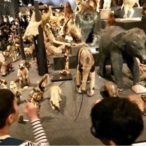 少しづつ親の手を離れ、自立してゆく息子。哺乳類展と動物絵本