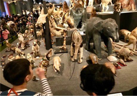 少しづつ親の手を離れ、自立してゆく息子。哺乳類展と動物絵本【Anneママの『絵本とボクと、ときどきパパ』】
