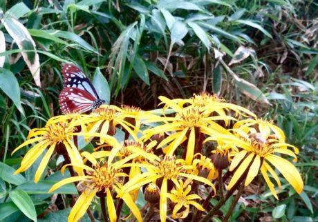 息子と私は、毎朝蝶の幼虫チェック。山椒の木とはらぺこいもむし、蝶の絵本【Anneママの『絵本とボクと、ときどきパパ』】
