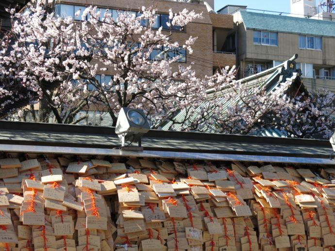 白梅が咲く受験シーズンの湯島天神 Yushima Tenjin Shrine (Yushima Tenmangu Shrine)
