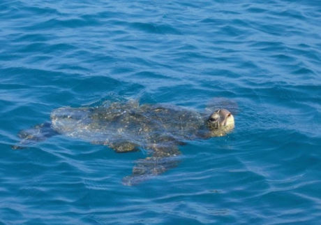 「海洋プラスチックごみ」を減らすために今日からできること。