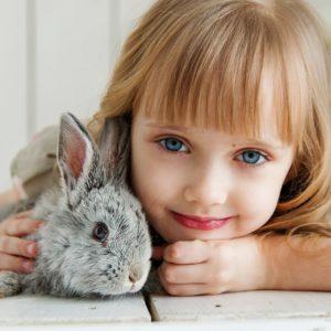 rabbit-3660673_1920